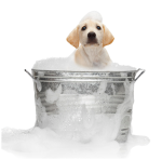 Dog Wash