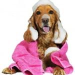 Washed Dog