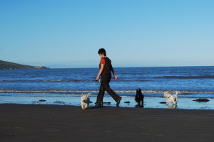 Dog Walking In Weston Super Mare